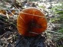 Nezbední návštěvníci lesa kopou do hub, stěží pak vidí krásu, která i po takovém trestuhodném činu je lesu vlastní