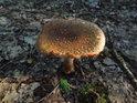Zrádná krása hub v Bosonožském hájku