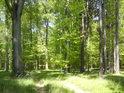 Cesta do bývalé přírodní rezervace Bradlec.