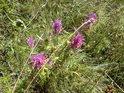 Brániska jsou domovem mnoha druhů květin.