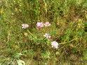 Tolik druhů rostlin na tak malém místě...