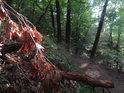 Ještě neopadané listy z ulomené dubové větve u pěšiny přes Břenčák.
