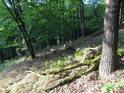 Dubový les obsahuje místa osvětlená i stinná.