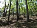 Pohled vzhůru na vrchol Břestecké skály, kořeny stromů tvoří záchytné body pro nohy poutníků.