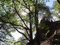 Pohled s hlavou zakloněnou na vrchol Břestecké skály.