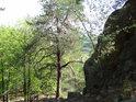 Východní okraj Břestecké skály.