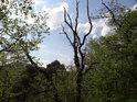 Souška ční vzhůru mezi živou zelení na vrcholu Břestecké skály.