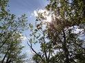 Prudké jarní Slunce se snadno dostává až na zemský povrch, pokud se listí teprve rozvíjí.