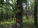 Poněkud nízko umístěná ptačí budka na dubu nesoucím vnitřní hraniční znak chráněného území.