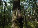 Trojúhelníková ptačí budka nízko na dubu.