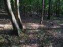 Světelné podmínky v lese bývají proměnlivé.
