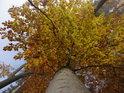 Nádherně podzimně zbarvený buk.
