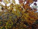 Podzimní listí zblízka.