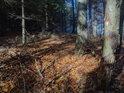 Sluneční ostrůvek ve hraničním temném lese.