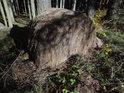 Kolo sena v lese se pozvolna propadá do země.