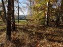 V nitru podzimního březového háje.