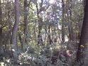 Takový typický pohled do nitra lužního lesa.