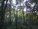 Když Slunce osvětluje jen horní polovinu lesa.