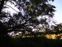 Pohled z lesa na pole při žních.