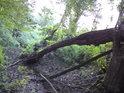 Vznikají tu různé situace s tématem vrbového dřeva.