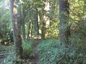 Pěšina vede i světlejší částí lesa.