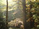 Podzimní Slunce rozráží svými paprsky mlhu.