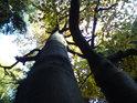 Malý a velký podzimní buk v Broumovských stěnách.