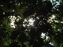 Večerní Slunce sotva proniká bukovým listím.
