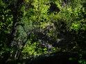 Pohled stromovým okénkem do prudšího svahu.