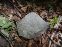 Nahodile ležící kámen na bukovém listí.