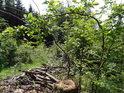 Kdysi odložené nařezané větve nikdo neuklidil a tak zarůstají.