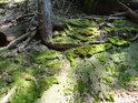 Smrkové kořeny si ve skalách hledají svůj prostor.