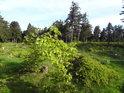 Slunce ráno posupně osvětluje paseku s borůvčím.