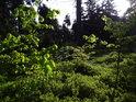 Pohled z paseky k lesu, který ještě nebyl prosvětlený jarním Sluncem.