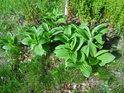 Chráněné rostliny na chráněném místě uvnitř chráněného území.