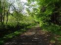 Lesní cesta uvnitř chráněného území.
