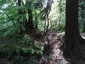 Koryto vysychajícího potůčku mezi stromy.