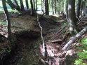 Koryto vysychajícího potoka, kde břehy jou zpevněné bukovými kořeny.
