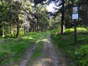 Lesní cesta na východním okraji Bukačky.