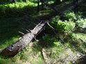 Uražená horní třetina smrku se stala padlým dřevem.
