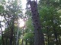 Slunce, pronikající přes listí zdravých stromů, dokresluje atmosféru pralesa.