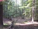 Ač prales, přesto se dá projít bez mačety.