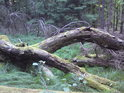 Dřevěný klenutý most.