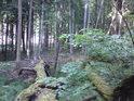 Na samém pokraji pralesa.