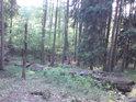 Tak nějak bychom mohli vnímat smíšený prales.