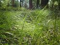 Do lesní trávy se sice lehnout dá a je to moc krátké, je však nutno mít zakryté všechny části těla.