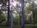 Příliš rozsáhlé dutiny u stále plně živých stromů nevěstí nic dobrého pro jejich budoucnost.