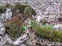 Že by v lese vyrostl nějaký čtyřlístek?