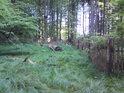 Rozlučme se s přírodní rezervací Buky u Vysokého Chvojna.