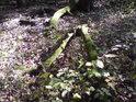 Zajímavý tvar padlé větve, mechem obrůstající.
